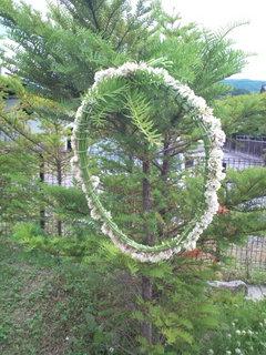 2012シロツメクサ木にかける.jpg