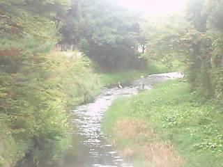 2012来内川のサギ.JPG