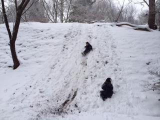 雪遊びその2.jpg
